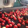 Azienda Agricola Casal Bio Plant prodotti agricoli