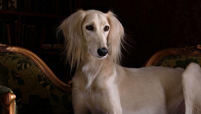 La razza canina più antica del mondo