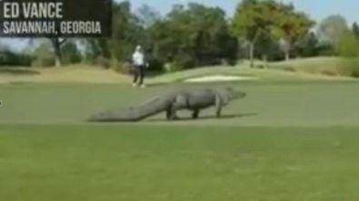Terrore sul campo da golf!