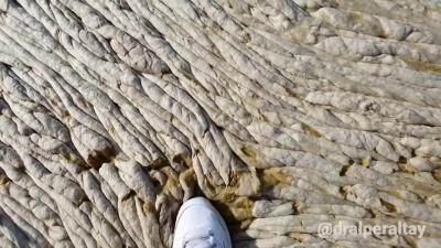 Sembra un enorme tappeto, invece è mucillagine