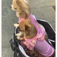 LUXURY4DOG cappottini per cani
