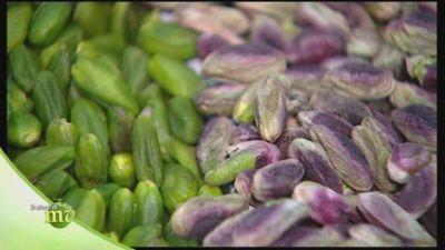 Le varie qualità di pistacchio