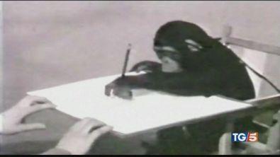 Lo scimpanzè pittore che incantò Picasso