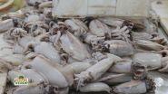 Le seppie e il pescato di Chioggia