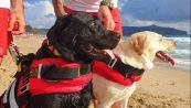 Cani-bagnino salvano una 15enne: il salvataggio spettacolare