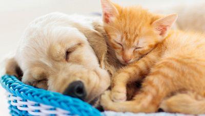 L'amicizia tra un cane e un gatto che appassiona la Turchia