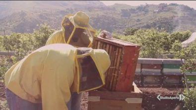 Dimezzata la produzione di miele