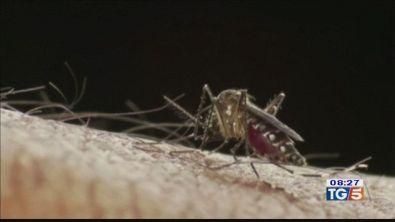 Oggi è il mosquito day