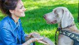 I cani capiscono se il padrone mente: cosa rivela uno studio