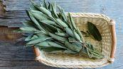 Salvia, 5 usi alternativi che forse non conoscevi