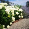 Garden il Girasole Foto