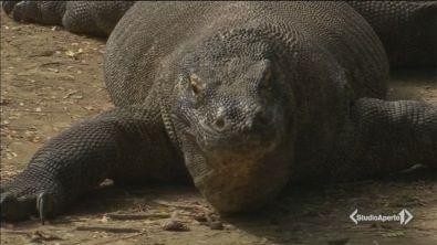 Chiude l'isola del drago di Komodo