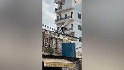 Il mistero della scimmia comparsa dal nulla in città