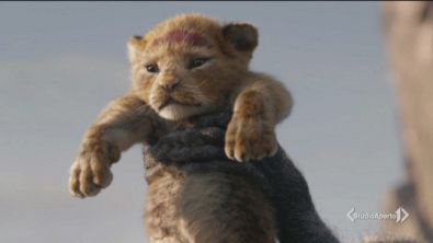 Il nuovo re leone