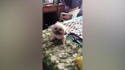 Il tenero cucciolo si gode la brezza del ventilatore