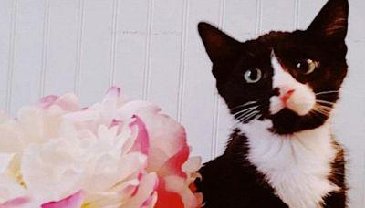 L'incredibile avventura (a lieto fine) del gatto Felix