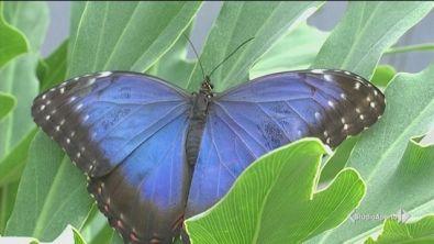 Bracconieri di farfalle