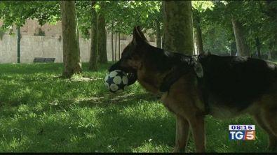 Un patentino per chi possiede un cane