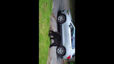 Come convincere un orso a uscire dalla tua auto