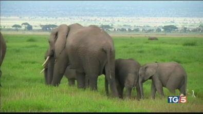 Atroce destino per 35 elefantini
