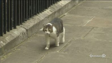 Cat-exit a Downing Street?