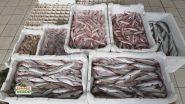 Il mercato ittico di Chioggia