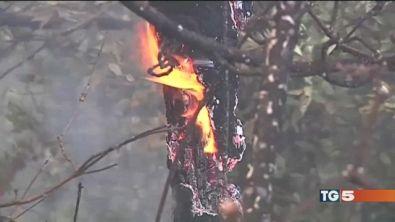 Incendi senza tregua Sila, 12 giorni di roghi