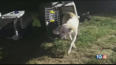Mille cani salvati da un rito atroce