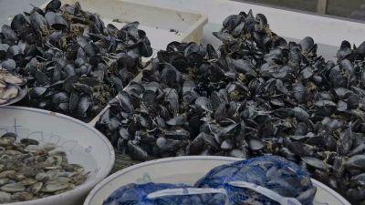 Datteri di mare: perché è illegale pescarli e cosa si rischia